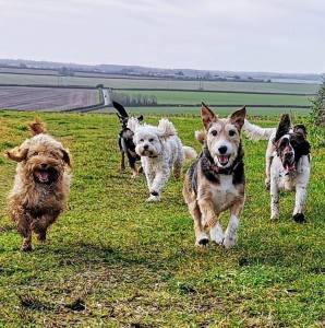 Feb 19 Pimperne Terriers Running